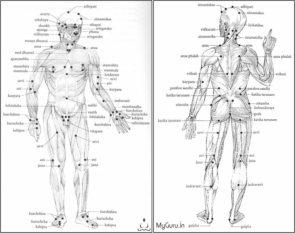 What Are The Acupressure Points On Human Body Charts Of Acupressure